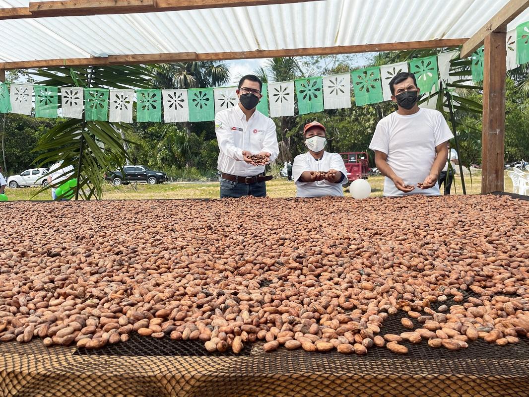 MIDAGRI impulsa comercio de cacao en la selva central de Huánuco. con plan de negocios de Agroideas.