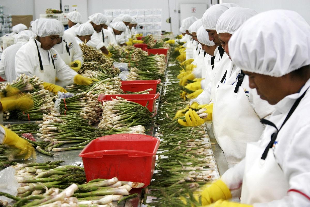 Oferta exportadora de superfoods a China crece en 114% sumando entre enero y agosto US$ 361 millones 624 mil.